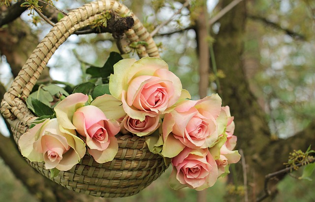 košík na růže.jpg