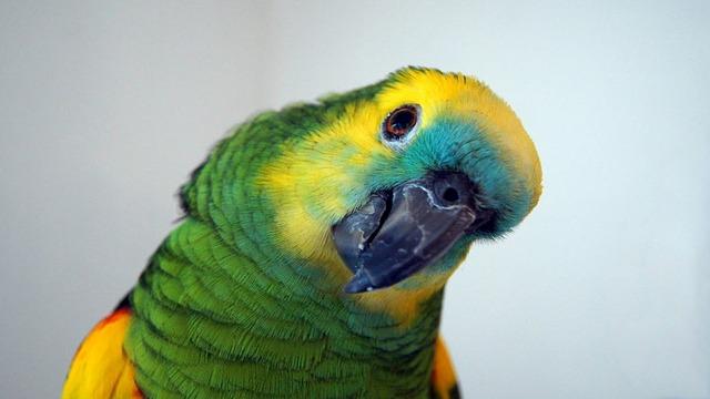 amazonský papoušek