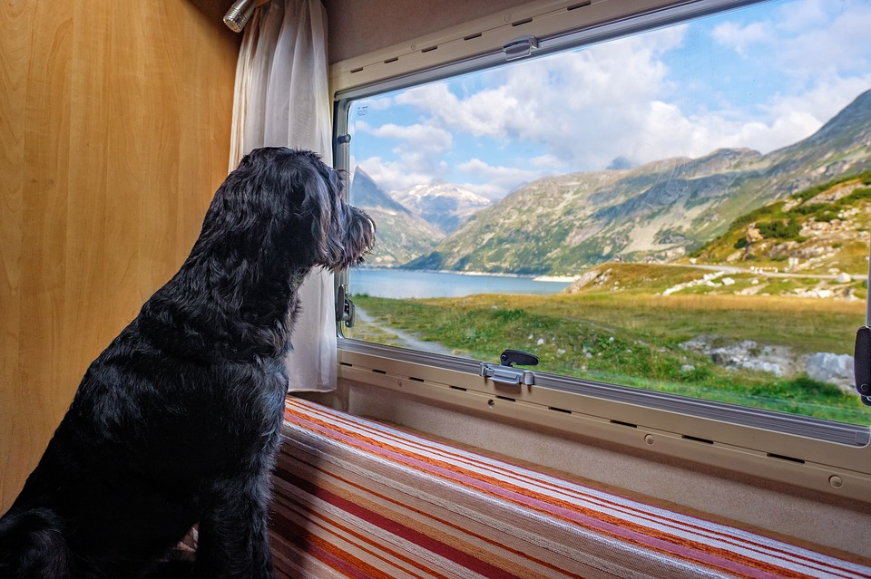 pes u okna